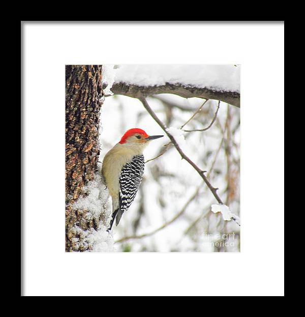 Woodpecker Framed Print featuring the photograph Red Head 2 by Rrrose Pix
