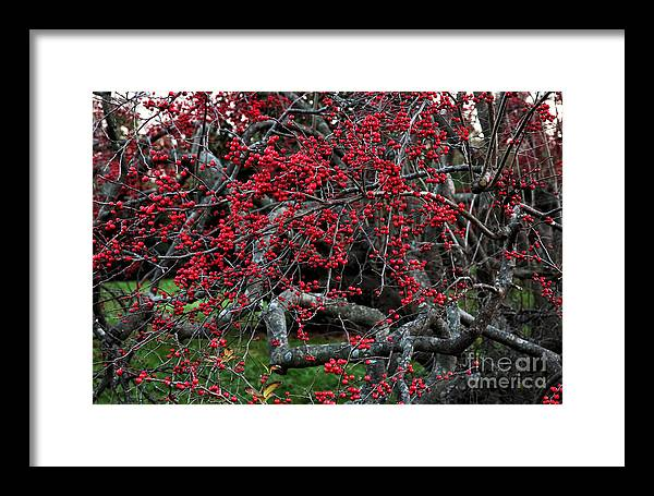 Red In Fall Framed Print featuring the photograph Red In Fall by John Rizzuto