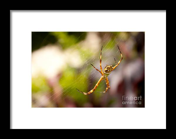 Arachnid Framed Print featuring the photograph Red Invisible / Invisible Web by Daniel Castillo
