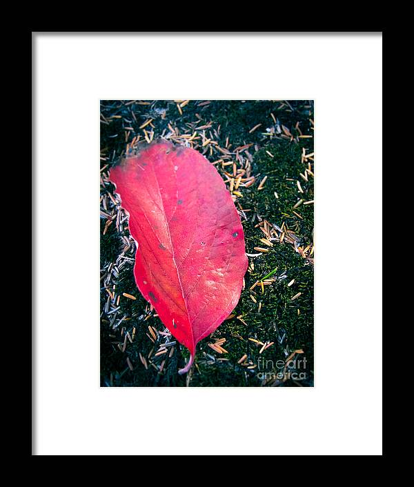 Leaf Framed Print featuring the photograph Red Leaf by Colleen Kammerer
