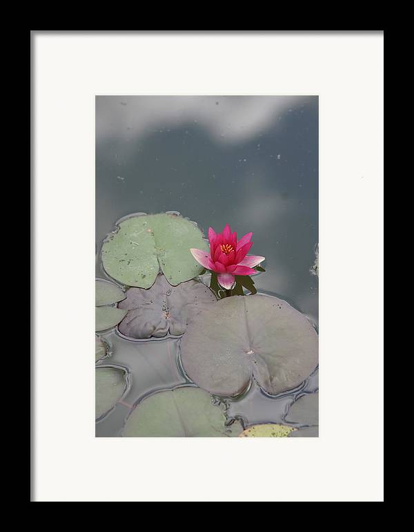 Lilly Framed Print featuring the photograph Red Lilly by Dervent Wiltshire