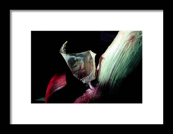 Onion Framed Print featuring the photograph Red Onion In The Dark by Rosemary Bliss
