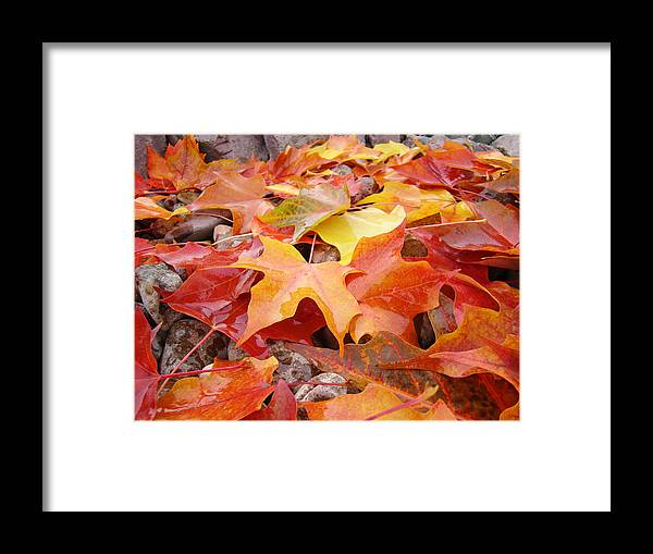 Red Framed Print featuring the photograph Red Orange Autumn Leaves Art Prints by Baslee Troutman