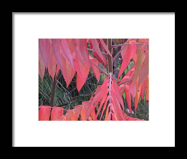 Abstract Framed Print featuring the photograph Red Point Wc by Lyle Crump