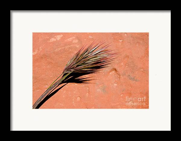 Nature Framed Print featuring the photograph Red Rock In Arizona by Julia Hiebaum