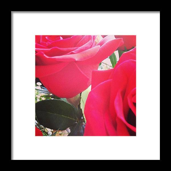 Beautiful Framed Print featuring the photograph #red #rose #roses #flower #nature #new by Amber Campanaro