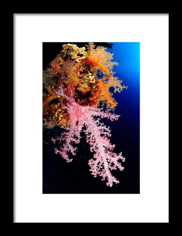 Underwater Framed Print featuring the photograph Red Sea Coral by Iñigo Gutierrez Photo