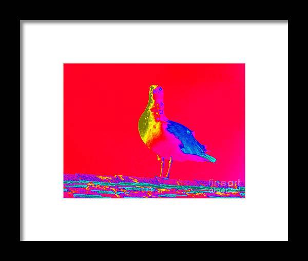 Pop Art Framed Print featuring the photograph Red Sky Seagull by Ed Weidman