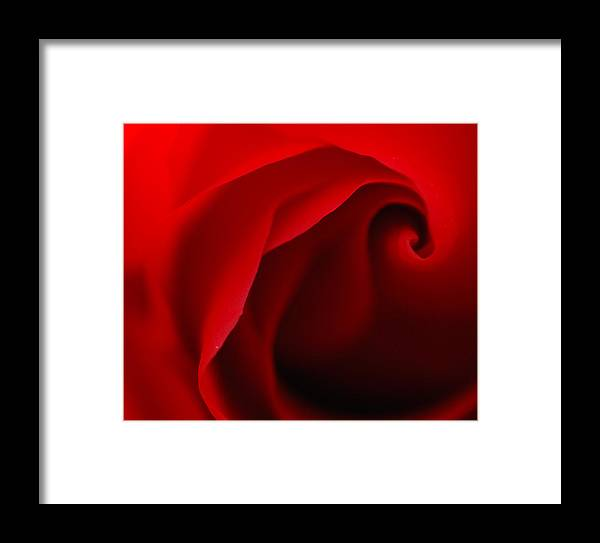 Rose Framed Print featuring the photograph Red Swirl by Sarah Rodefeld