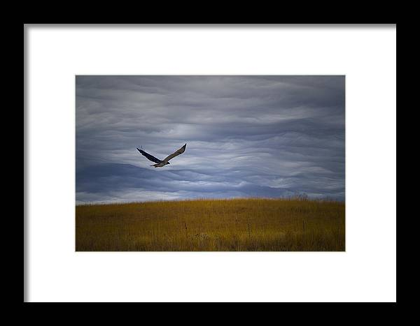 Composite Image Framed Print featuring the photograph Red Tail Hawk Over The Prairie by Shelly Gunderson