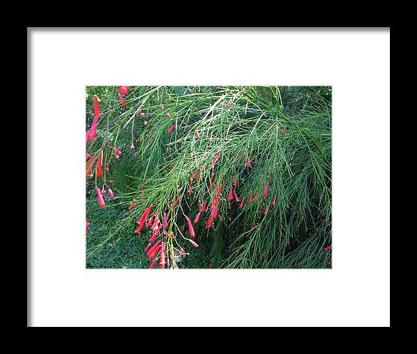 Red Framed Print featuring the photograph Red Teardrops by Ron Torborg