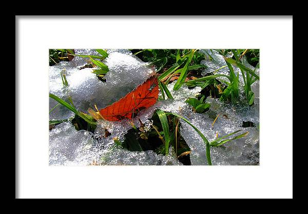 Red Leaf Framed Print featuring the photograph Redleafgrasscomp 2009 by Glenn Bautista
