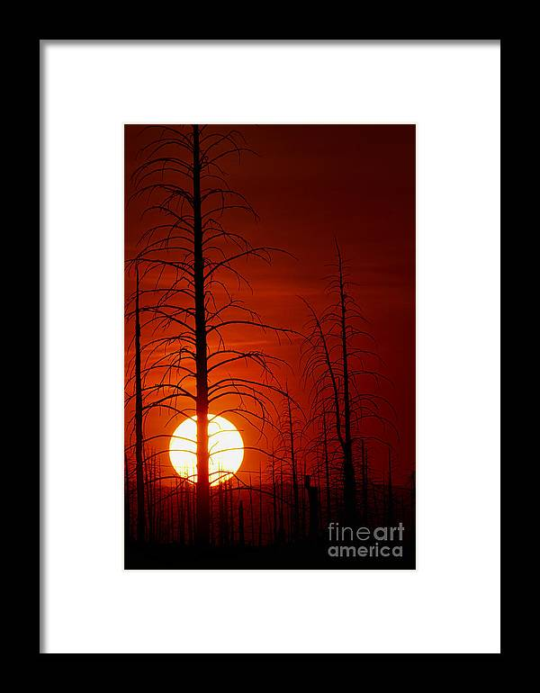 Buffalo Creek Fire Photograph; Buffalo Creek Fire Canvas Print; Red Sun Photograph Framed Print featuring the photograph Reds by Jim Garrison