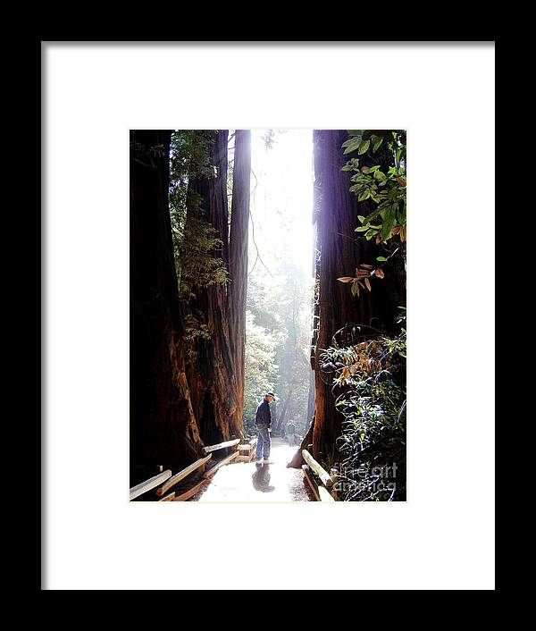 Pathway Framed Print featuring the photograph Redwood Path by Mary Rogers