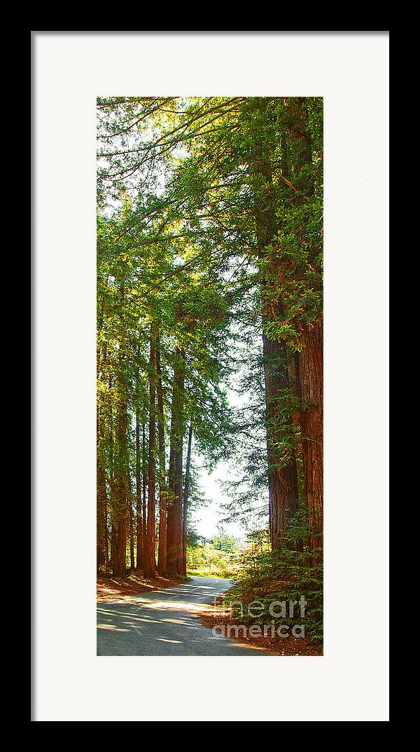 Redwoods Framed Print featuring the photograph Redwood Wall Mural Panel 2 by Artist and Photographer Laura Wrede