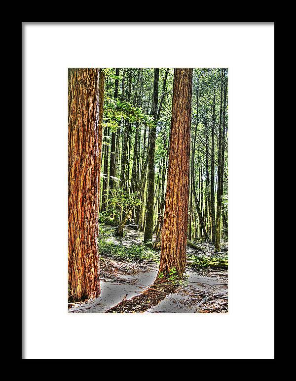 Basin Framed Print featuring the photograph Redwoods 2 Big Basin by SC Heffner