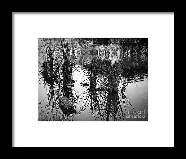Arizona Framed Print featuring the photograph Reeds by Arne Hansen