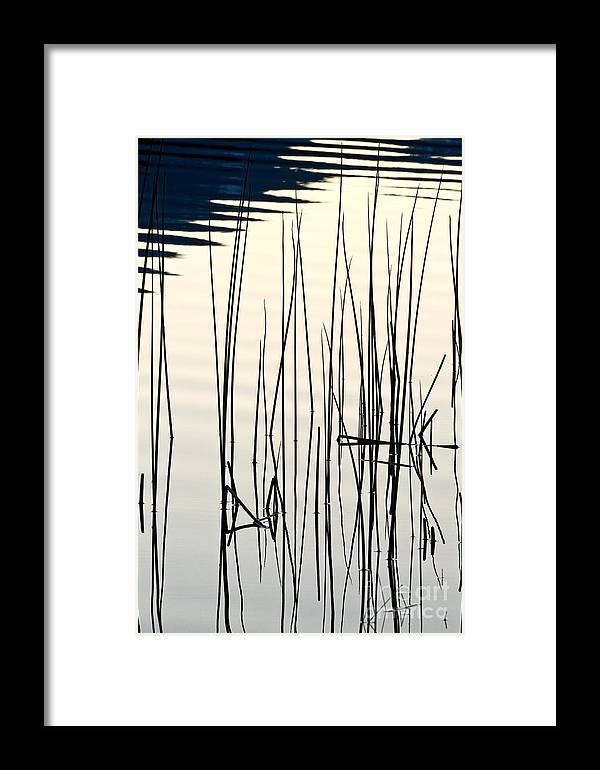 Abstracts Framed Print featuring the photograph Reeds II by Stuart Gordon