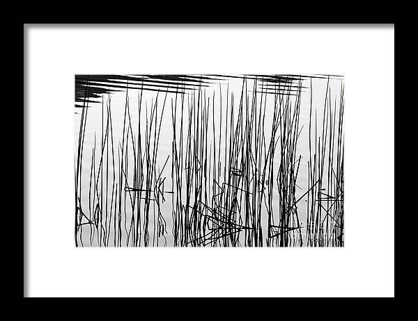 An Abstract Black & White Conversion Of Reeds In Lake Siskiyou Framed Print featuring the photograph Reeds IIi by Stuart Gordon