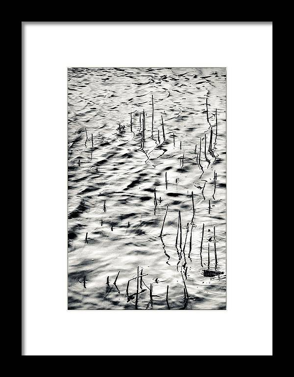 Henley-on-thames Framed Print featuring the photograph Reeds In Ripples by Lenny Carter