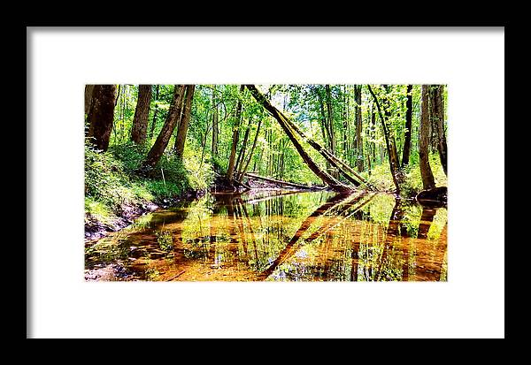 Bird Framed Print featuring the photograph Reflected Forests by Art Dingo