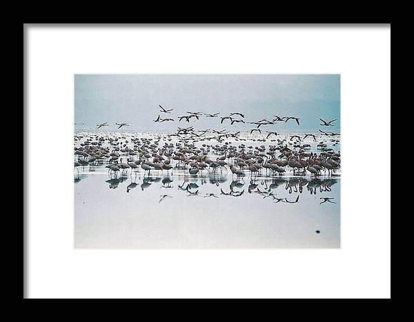 Birds Flying Framed Print featuring the digital art Reflecting Flight by Joseph Wiegand