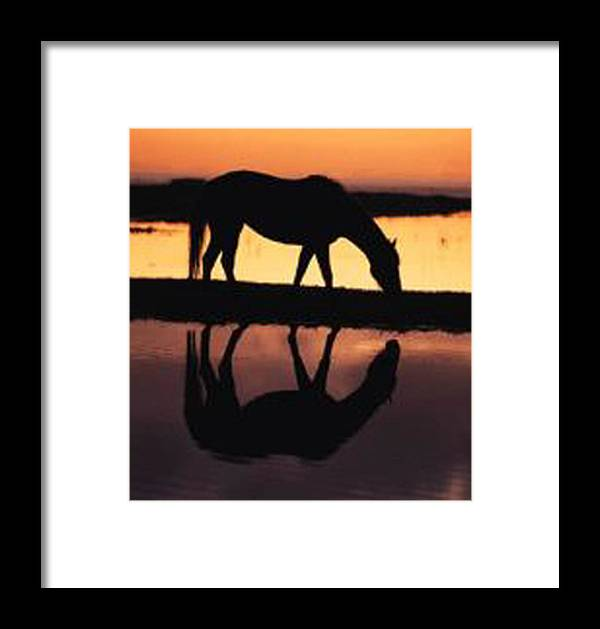 Horse Framed Print featuring the photograph Reflection Of Life by De Beall