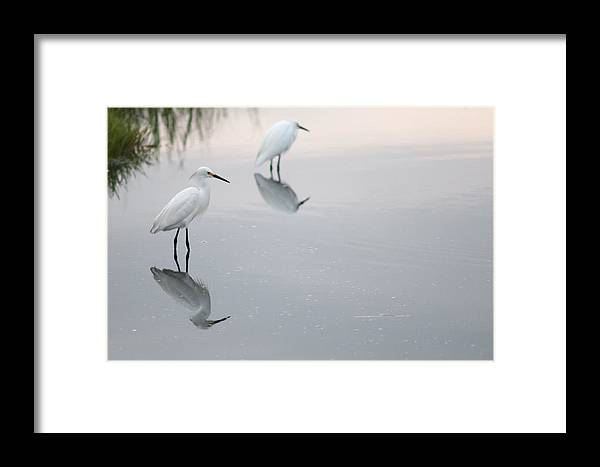Reflections Framed Print featuring the photograph Reflections by Denis Therien