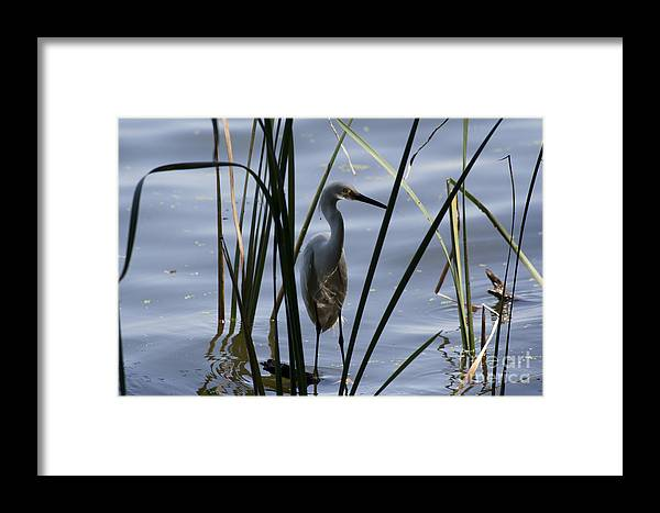 Water Birds Framed Print featuring the photograph Reflections by Kristy Ollis