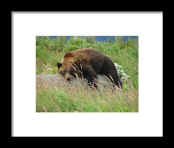 Animal Framed Print featuring the photograph Relax Man by Lew Davis