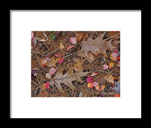 Leaf Framed Print featuring the photograph Remainders by Ann Horn