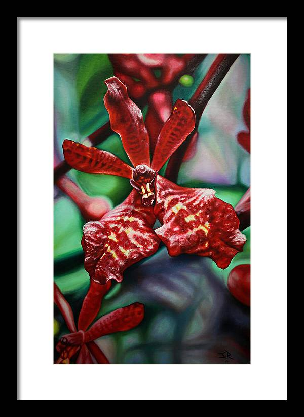 Orchid Framed Print featuring the painting Renanthera by Juan Torres