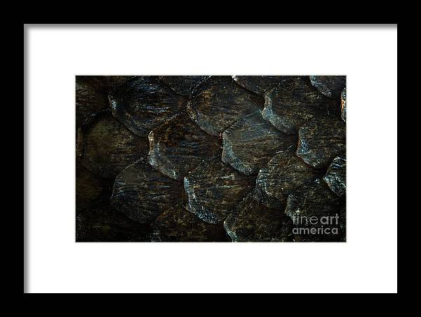 Reptile Skin Texture Framed Print featuring the photograph Reptile Skin Texture by Jolanta Meskauskiene