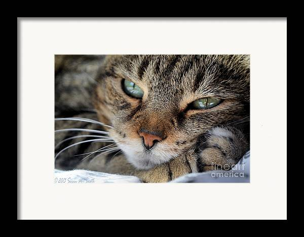 Photography Framed Print featuring the photograph Rest by Susan Smith