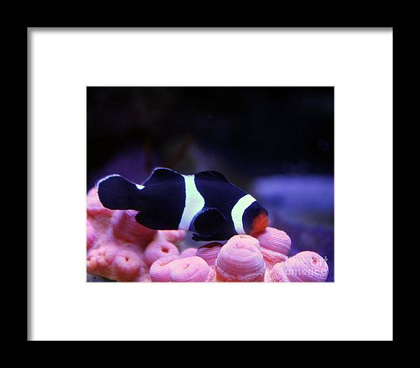Fish Framed Print featuring the photograph Rest by Wendy Maka - Alien Garden