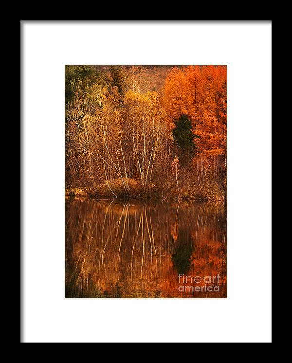 Autumn Framed Print featuring the photograph Restes d'Automne by Aimelle