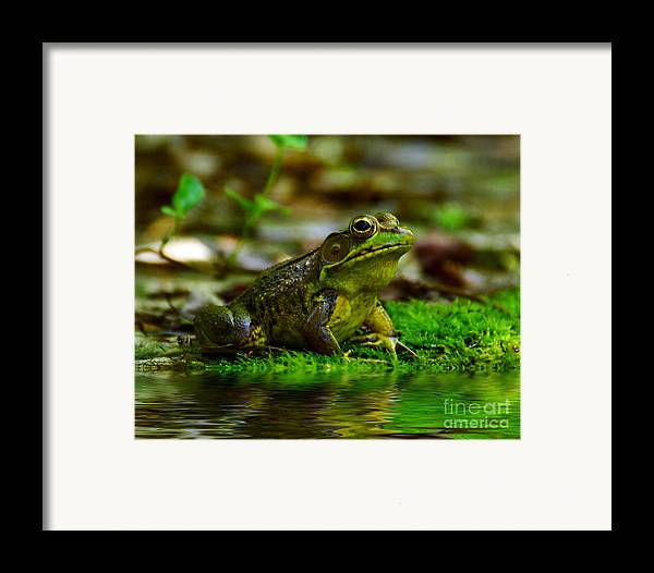 Frog Framed Print featuring the photograph Resting In The Shade by Kathy Baccari