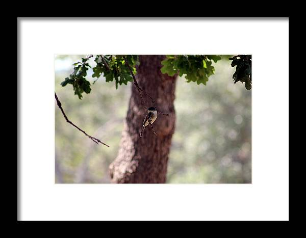 Bird Framed Print featuring the photograph Resting by Kristie Briones