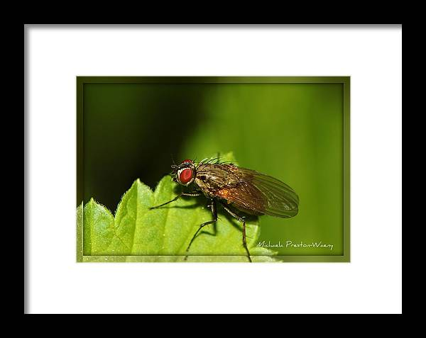 Nature Framed Print featuring the photograph Resting by Michaela Preston