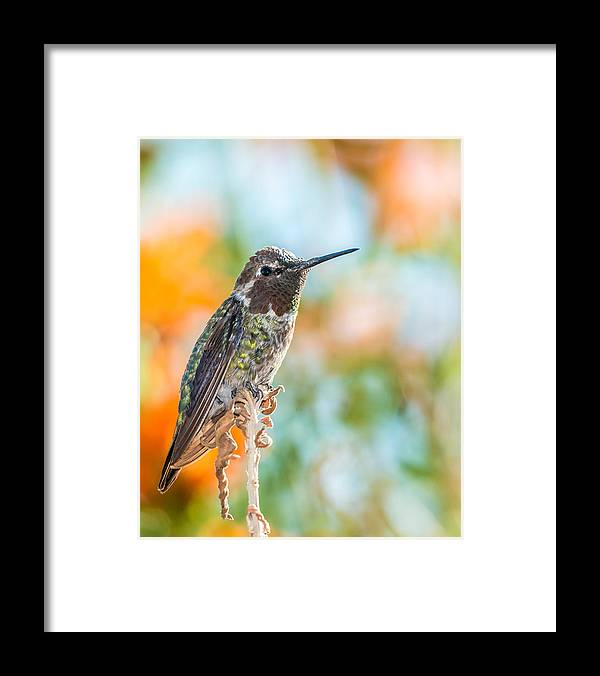Nature Framed Print featuring the photograph Resting by Paul Johnson