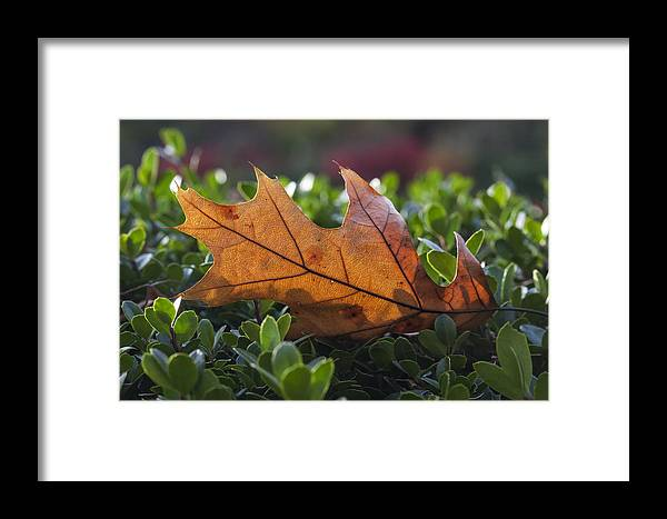 Leaves Framed Print featuring the photograph Resting Place by Robert Ullmann