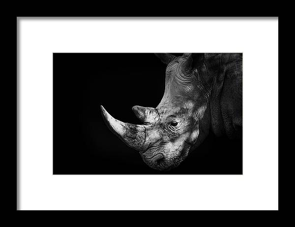 Horned Framed Print featuring the photograph Rhinoceros by Malcolm Macgregor