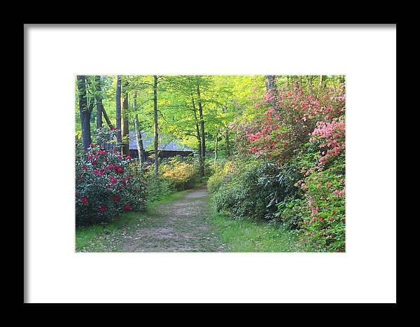 Paxton Framed Print featuring the photograph Rhododendron Path In Evening Light by John Burk