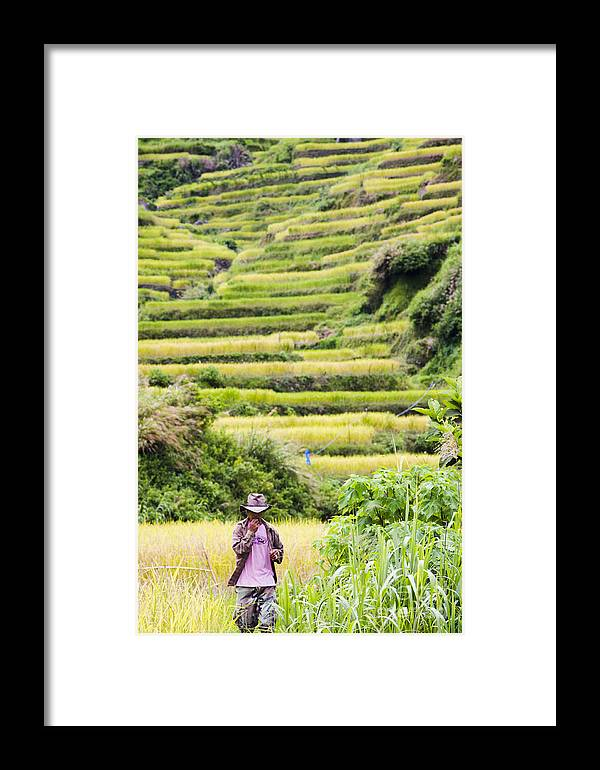 Rice Framed Print featuring the photograph Rice Terraces by Tuimages