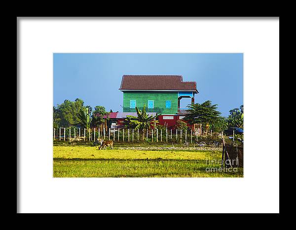 Cambodian Farmhouse Cambodia Fields And Farms Framed Print featuring the photograph Rich Farm by Rick Bragan