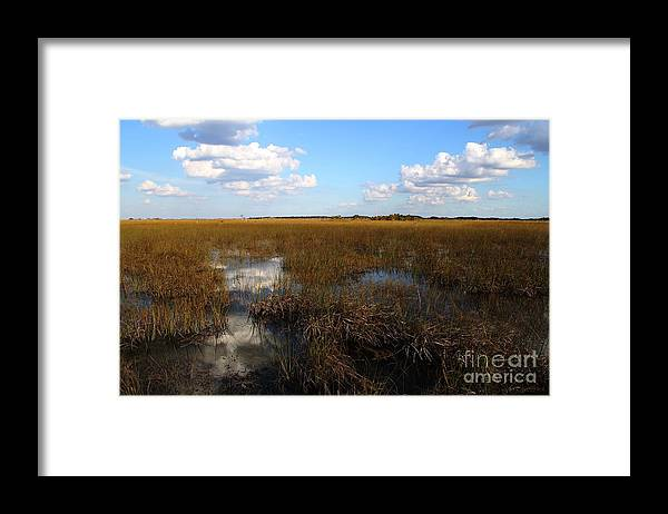River Of Grass Framed Print featuring the photograph River Of Grass by Theresa Willingham