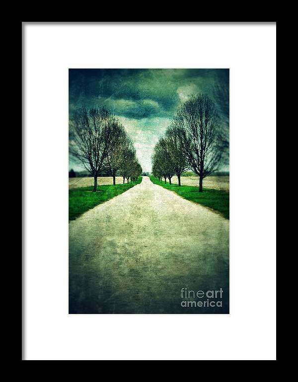 Road Framed Print featuring the photograph Road Lined By Trees by Jill Battaglia
