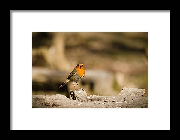 Animal Framed Print featuring the photograph Robin At Feeder by David Head
