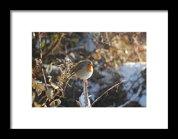 Robin Framed Print featuring the photograph Robin In Rays by Bethany Dean