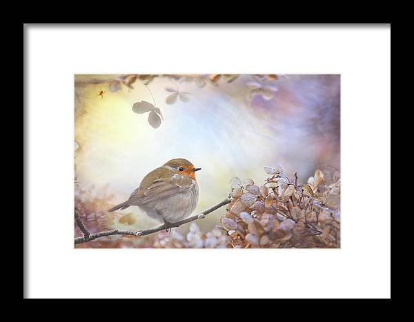 Robin Framed Print featuring the photograph Robin On Dreams by